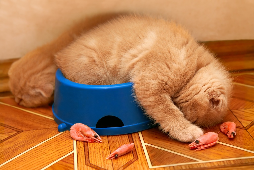 Two kittens sleeping in the bowl after having a meal