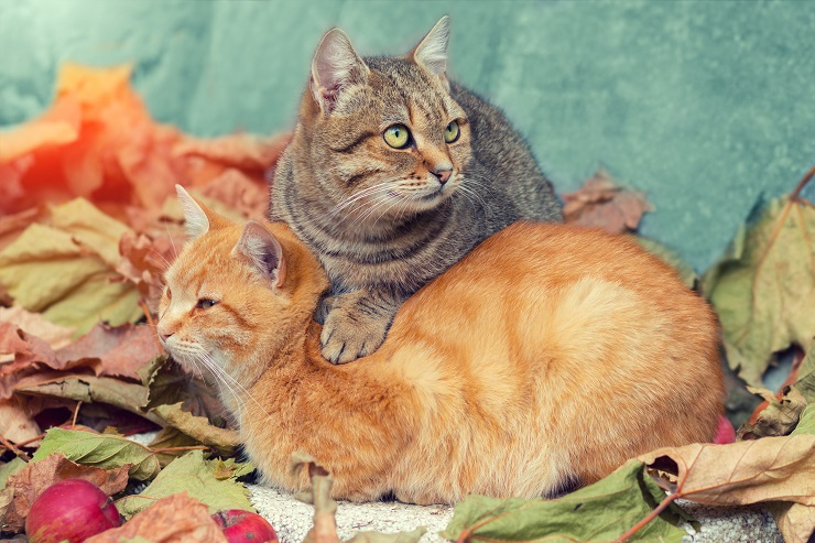 Two cats relaxing on fallen leaves